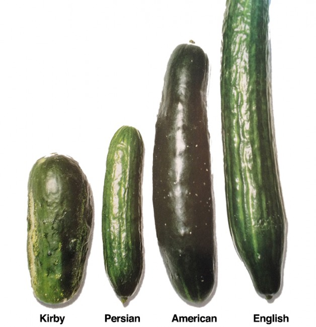 cucumber-variety